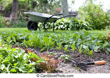 Fragmento de camas de jardín con hierbas frescas