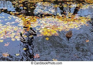 francia, luxemburgo, paris., otoño, jardines