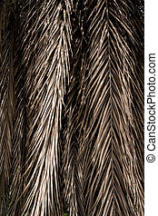 Franjas marrones de hojas de palma secas. Trasfondo abstracto