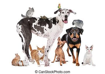 frente, plano de fondo, mascotas, blanco