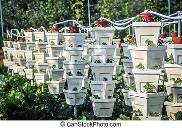 fresa, jardín, vertical