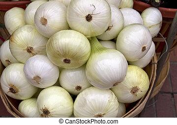 fresco, cebollas blancas