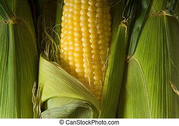 fresco, mazorca de maíz