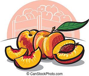 fresco, melocotón, fruits