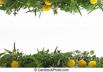Frontera de hierbas frescas en blanco