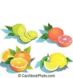 fruta cítrica, fruits.