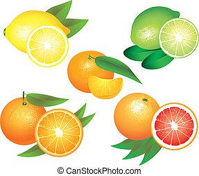 fruta cítrica, vector, conjunto, fruits