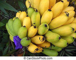Fruta de plátanos amarilla sobre verde