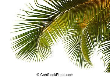 Frutas de coco