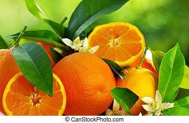 Frutas de naranja y flores