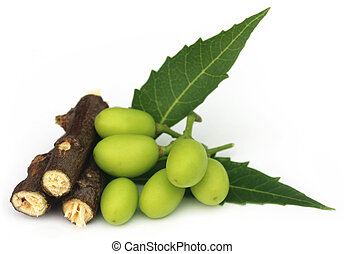 Frutas medicinales con ramas