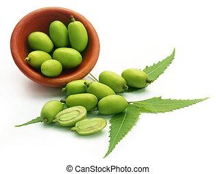 Frutas medicinales neem