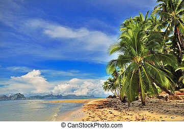 fuga, tropical