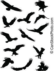 fying, silueta águila, pájaro