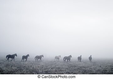 Galling en la niebla