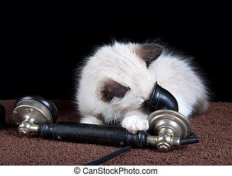Gatito al teléfono