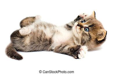 Gatito gracioso