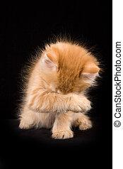 Gatito rojo Fluffy