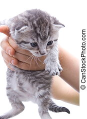 gatito, vulnerable