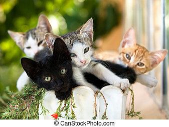 Gatitos en una olla