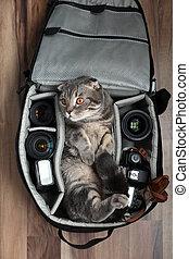 gato, bag., foto, bolsa