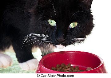 Gato blanco y negro comiendo de un tazón rojo.