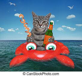 gato, cangrejo, bebidas, cerveza, inflable, gris