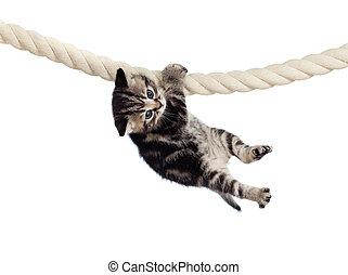Gato chistoso colgando de la cuerda
