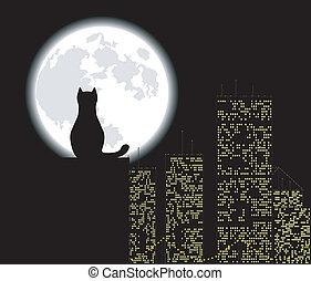 gato, ciudad grande