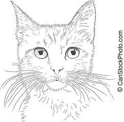 Gato de dibujo