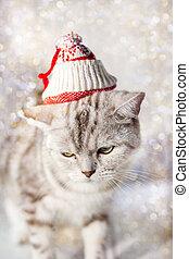 Gato de Navidad con gracioso sombrero de Santa en la cabeza.