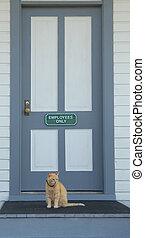 Gato en la puerta principal