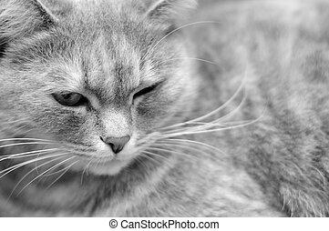 Gato esponjoso relajado