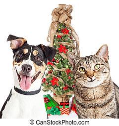 Gato feliz y perro con árbol de Navidad