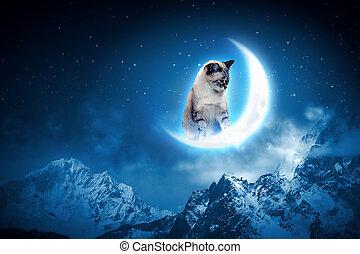 gato, gracioso, luna