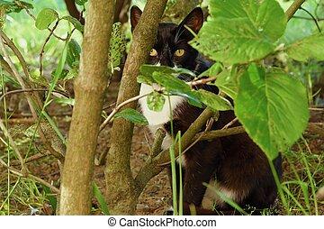 Gato negro en los arbustos verdes del parque