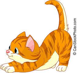 gato, pelo, extensión, lindo, rojo