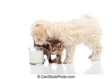 Gato y perro alimentándose juntos