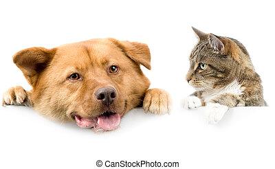 Gato y perro sobre bandera blanca