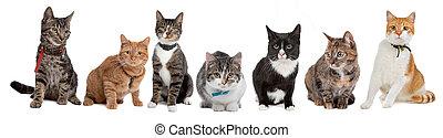 gatos, grupo