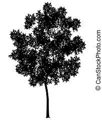 genérico, árbol