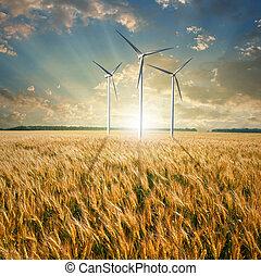 Generadores de viento turbinas en el campo de trigo
