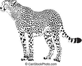 gepard, blanco, -, guepardo, negro