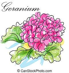geranio, flor