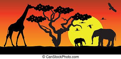 Giraffe y elefantes en África