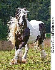 gitano, caballo