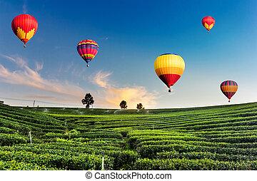 Globos aerostáticos volando sobre el paisaje de la plantación de té al atardecer
