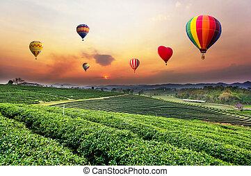 Globos aerostáticos volando sobre la plantación de té al atardecer.