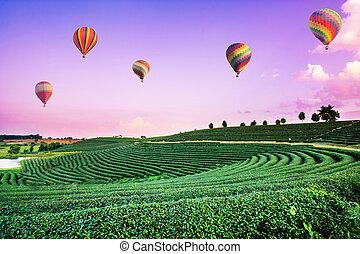 Globos de aire caliente coloridos volando sobre el paisaje de la plantación de té al atardecer