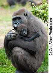 gorila, bebé, ella